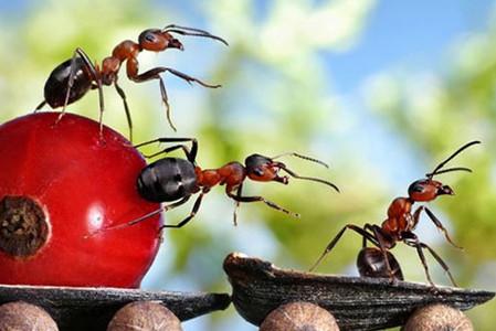 Как избавиться от муравьев навсегда?
