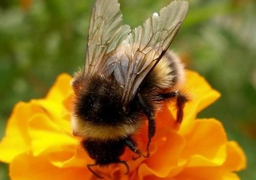 Укусила пчела. Что делать?