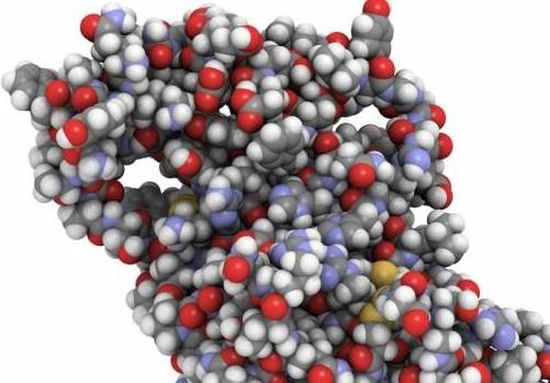 Пептиды – неотъемлемая часть здорового образа жизни и красивого тела!