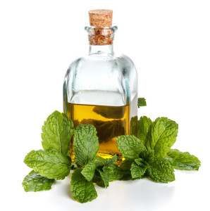 Bottle of pure fresh olive oil with mint