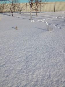 С моим газоном в этом году все в порядке.) Хорошо укрыт снегом.