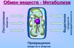 kak-protekaet-metabolizm