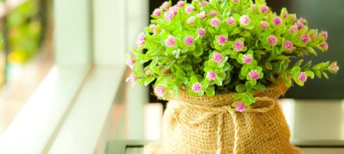 Скажи, какой цветок у тебя дома, и я скажу тебе, кто ты!
