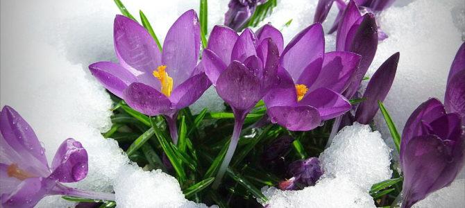 Какие цветы можно сажать под зиму?
