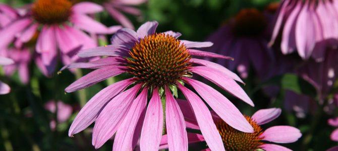 Какие цветы цветут все лето?